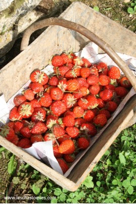 panier fraise mention